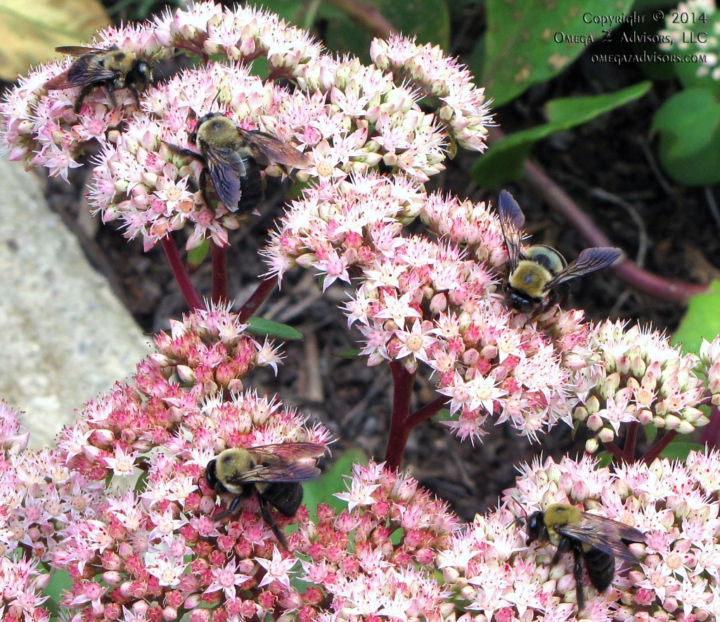 Busy Bees Can Sting